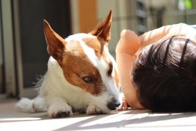 仲良しの犬と子供